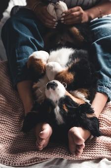 Piccolo cucciolo di bovaro del bernese sulle mani della ragazza alla moda con una bella manicure. animali, moda