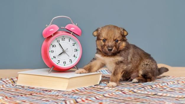 Piccolo cucciolo vicino al libro e all'orologio (sveglia), lavorando in ufficio