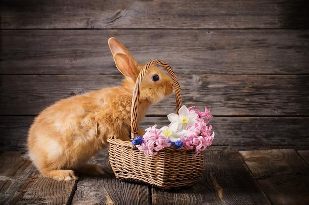 Coniglio con fiori primaverili