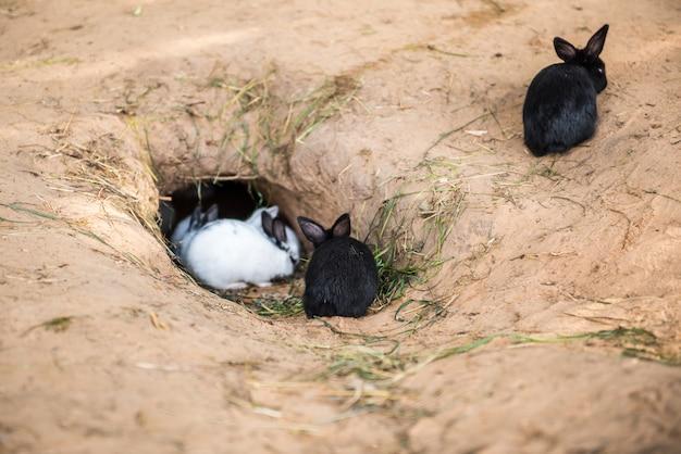 Piccoli conigli sono seduti e mangiano carote in una buca, alcuni dormono