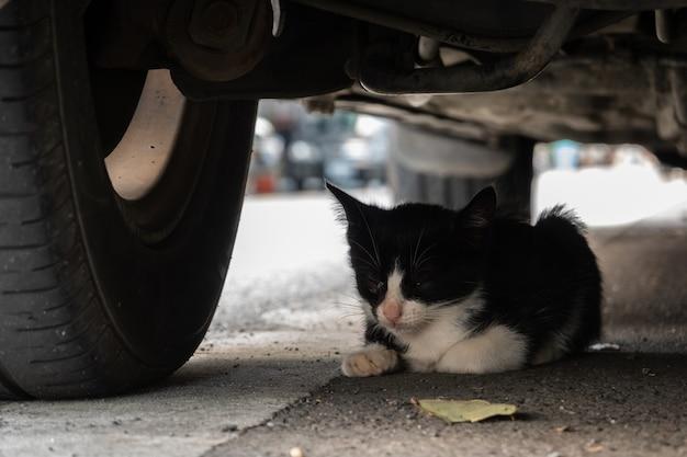 Piccolo gatto randagio bianco e nero nascosto sotto un'auto