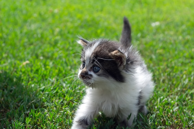 Piccolo gattino randagio che gioca sull'erba