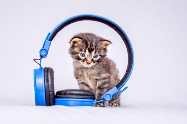Un piccolo gattino a strisce siede vicino alle cuffie. ascolta la tua musica preferita_