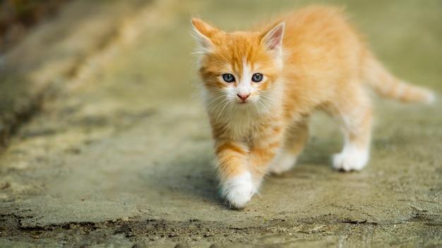 Piccolo gatto dolce. gattino arancione che gioca fuori. ritratto adorabile del gatto del bambino.