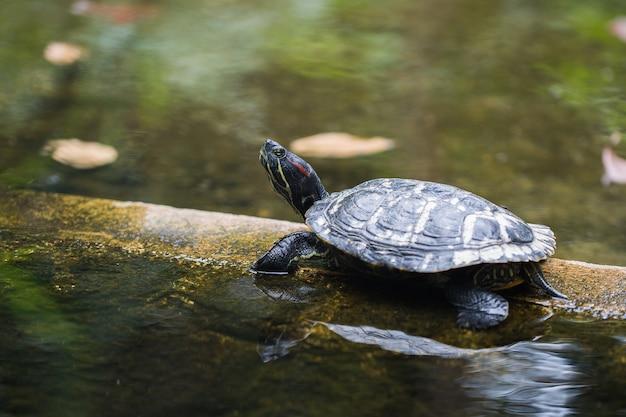 Dettaglio alto vicino della piccola tartaruga