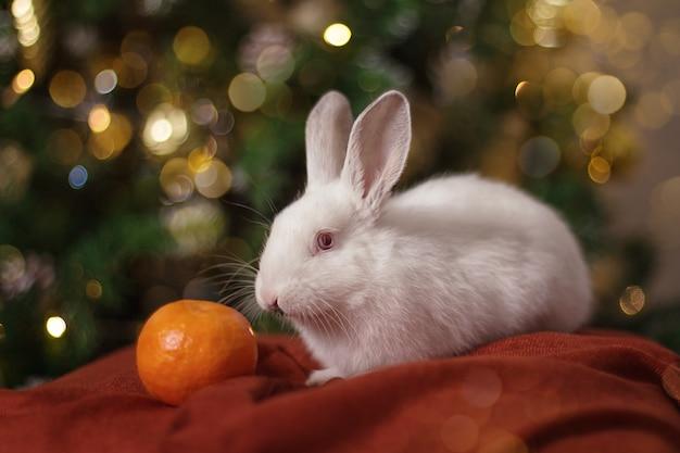 Coniglietto bianco con un'arancia su una sciarpa bordeaux di luci natalizie
