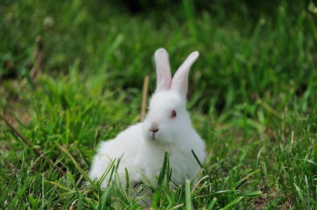 Piccolo coniglio bianco su erba verde in giornata estiva