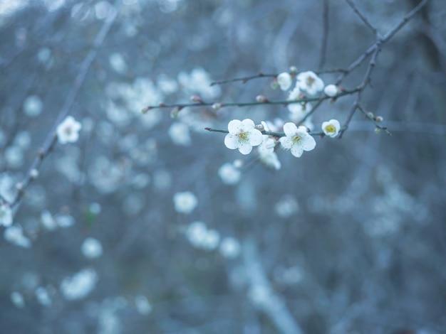 Piccoli fiori selvatici bianchi in inverno con sfondo tono freddo con spazio copia. piccoli fiori sui rami. sfondo naturale fiore bianco.
