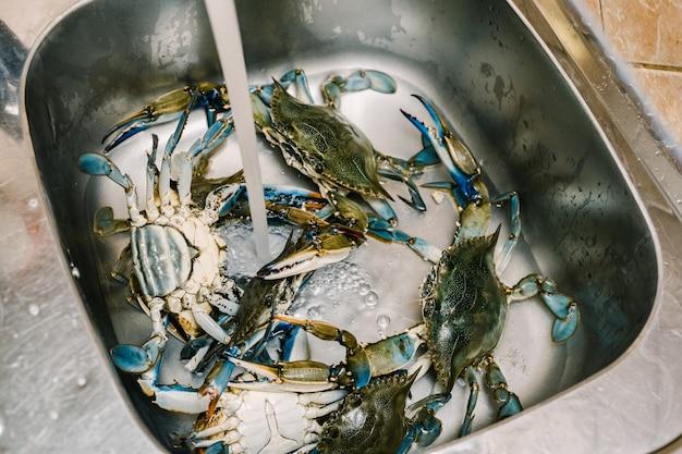 Granchi azzurri vivi nel lavello della cucina