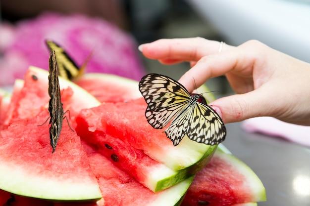 Farfalle vive con il primo piano delle ali gialle.
