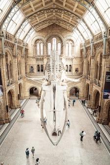 Londra 4 settembre 2019. la gente visita il museo di storia naturale di londra.