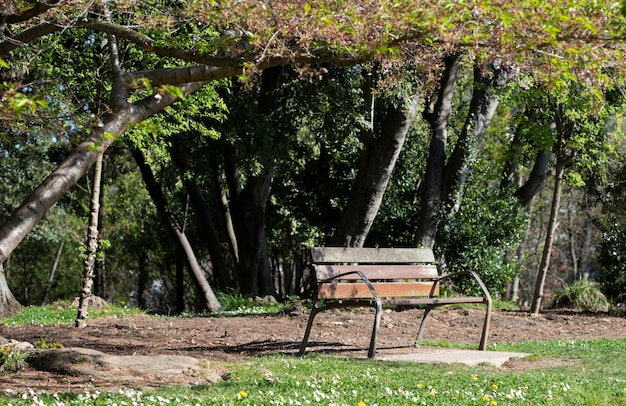 Panchina solitaria nel parco