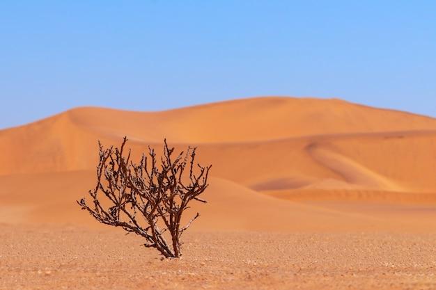 Cespuglio secco solitario su uno sfondo di sabbie dorate nel deserto del namib