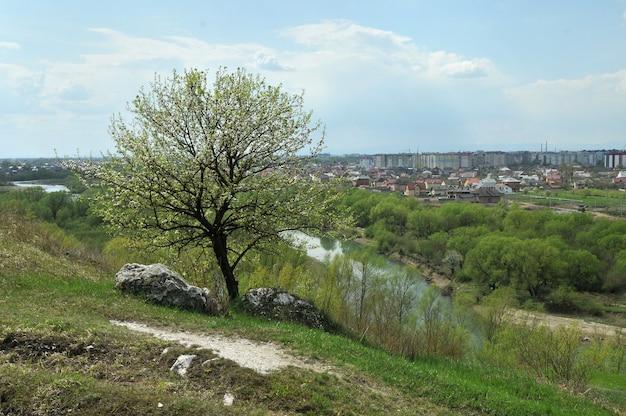 Albero solitario in fiore su un'alta scogliera sopra il fiume con la città sullo sfondo