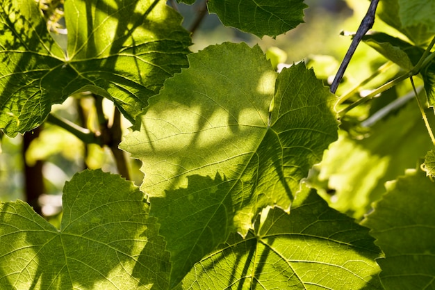 Alberi solitari con fogliame verde nel periodo estivo dell'anno, arriva una mattina di sole e diventa caldo