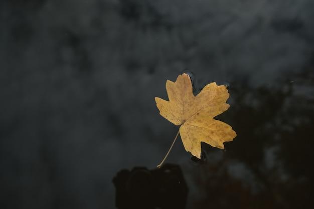 Una foglia solitaria nell'acqua del lago, foresta d'autunno