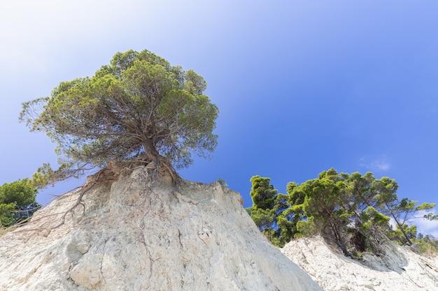 Albero solitario su una scogliera contro il bel cielo blu.