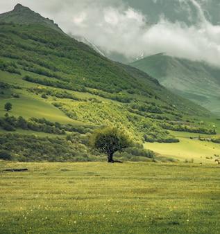 Albero solitario ed erba verde nella parete della montagna