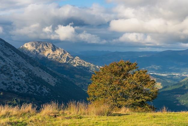Un albero solitario su una collina sul tramonto nel parco naturale di urkiola
