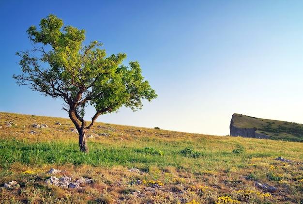 Albero solitario in montagna. composizione della natura.