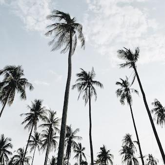 Palme da cocco esotiche tropicali solitarie contro il cielo blu in una giornata ventosa