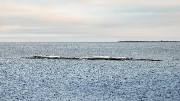 Una pietra lunga e stretta che sporge dall'acqua. il freddo mar bianco. vista sul mare minimalista.