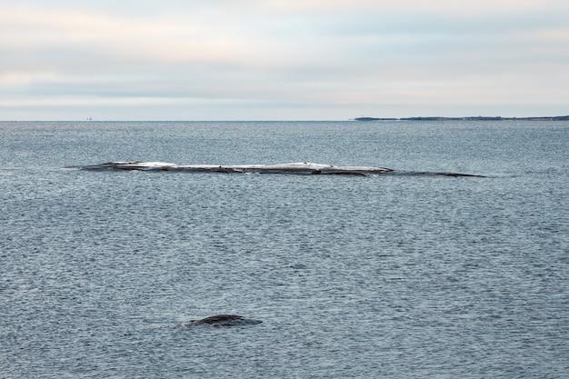 Una pietra lunga e stretta che sporge dall'acqua