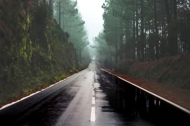 Lunga strada sotto la pioggia in montagna con foresta di pini e nuvole di nebbia davanti e cielo grigio chiaro