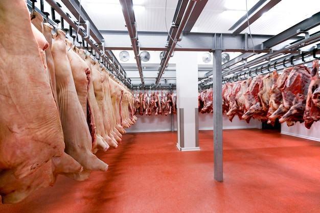 Un sacco di carne fresca cruda tagliata di maiale e manzo appesa e disposta e lavorata deposita in frigorifero, in fabbrica.