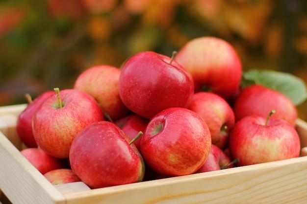 Molte mele rosse succose nella scatola di legno