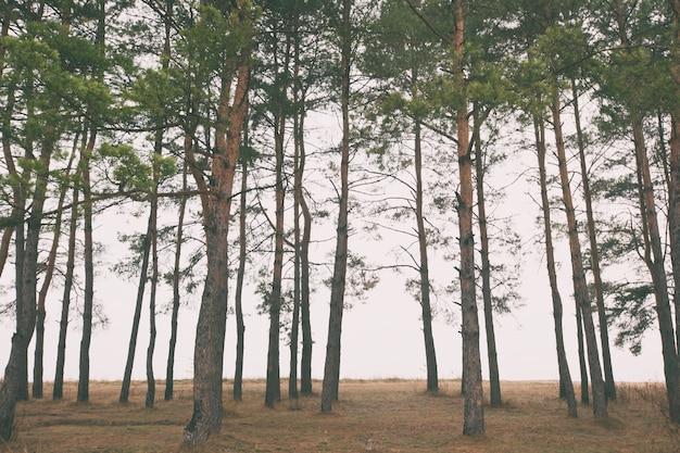 Un sacco di alberi nella nebbia e prato dietro di loro