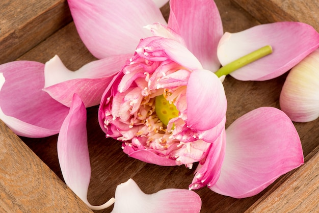 Fiore di loto e petalo su un vecchio fondo di legno.