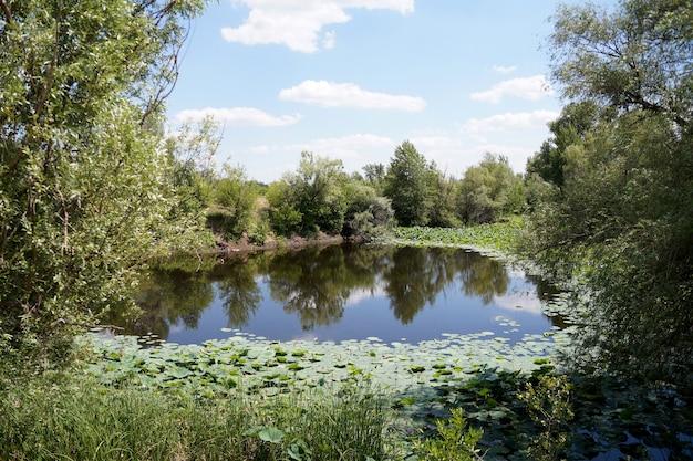 Loti in una pianura alluvionale del fiume volga nella regione di volgograd in russia
