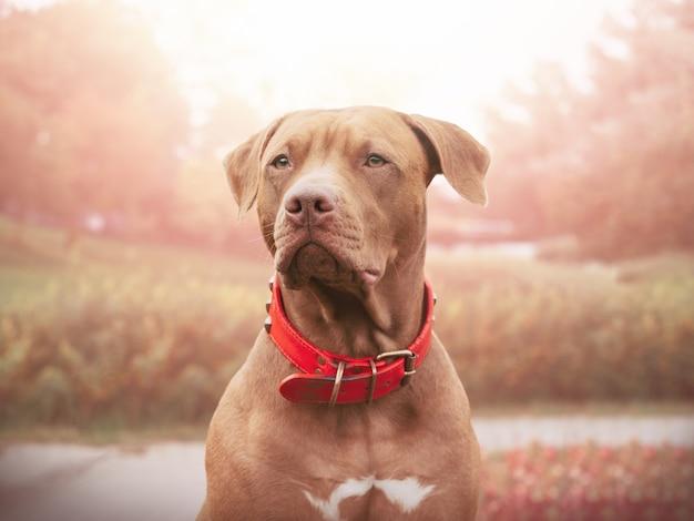 Adorabile, grazioso cucciolo di colore marrone. avvicinamento