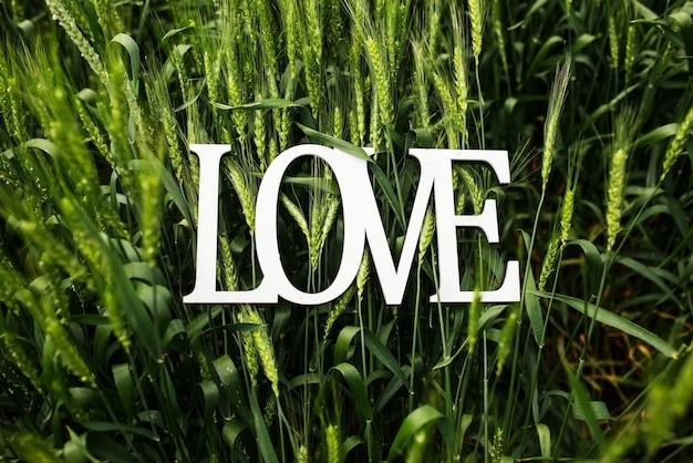 Parola di amore nel grano, foto da vicino