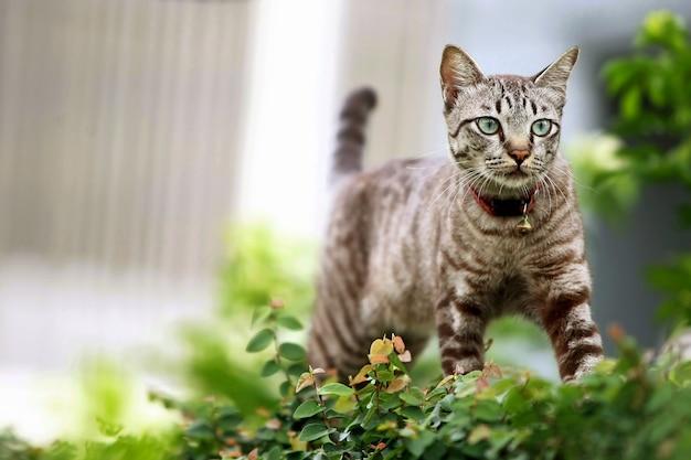Bel gatto grigio che cammina all'aperto