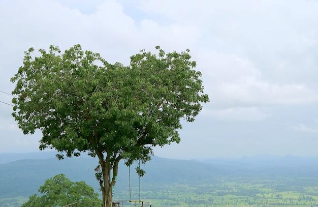 Adorabile albero naturale a forma di cuore nella provincia di phitsanulok in thailandia
