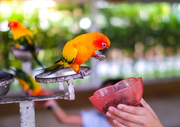 Pappagallo adorabile che mangia cibo per uccelli.