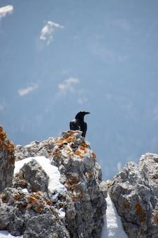 Inquadratura dal basso di un gracchio alpino arroccato su una montagna innevata