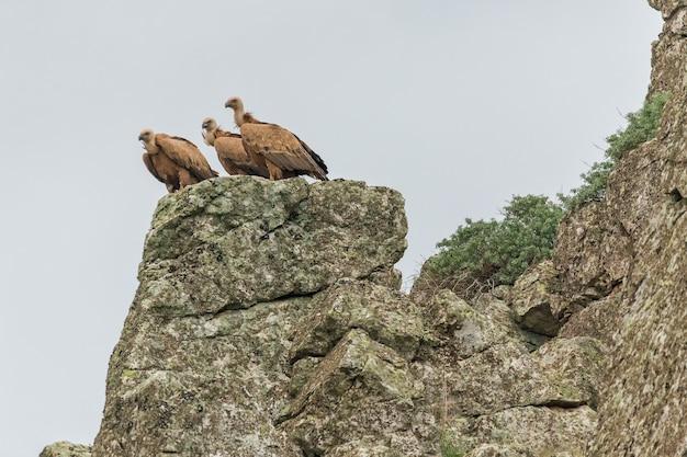 Inquadratura dal basso di un avvoltoio grifone nel parco nazionale di monfrague in spagna