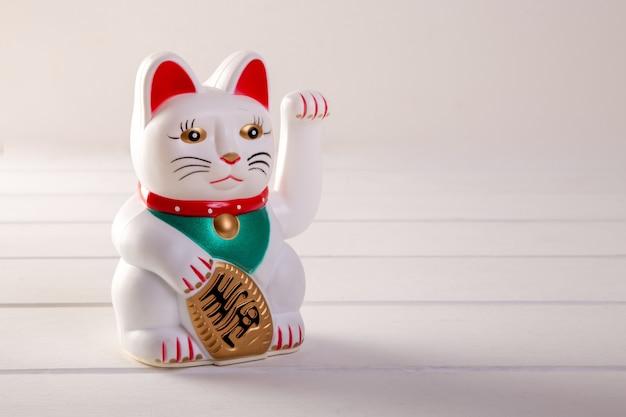 Gatto fortunato su sfondo bianco
