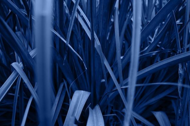 Luscious erba vicino. consistenza alle erbe. classico colore blu dell'anno 2020. sfondo, sfondo