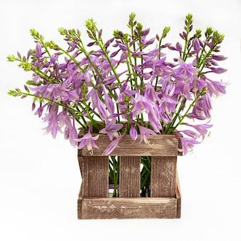 Lussureggiante grande bouquet di delicate campane viola in una scatola di legno