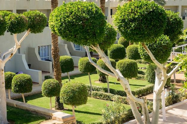 Progettazione del paesaggio di lusso del giardino tropicale