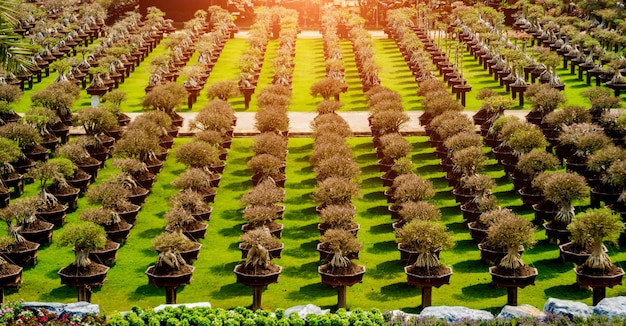 Architettura del paesaggio di lusso del giardino tropicale