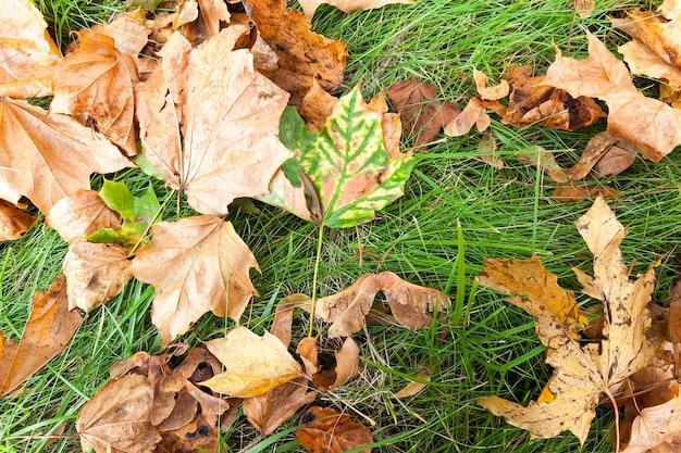 Sdraiato a terra le foglie cadute sugli alberi nella stagione autunnale.