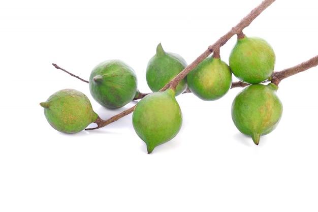 Noce di macadamia isolata su bianco