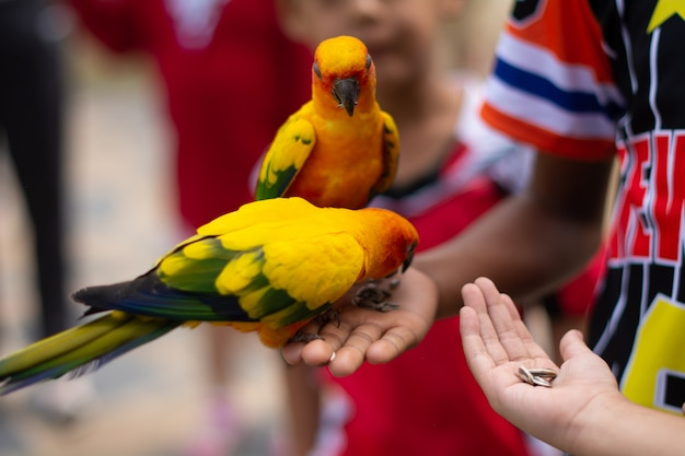 Uccello dell'ara che mangia dalla mano umana