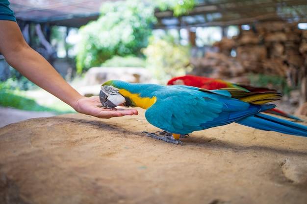 Il pappagallo dell'ara alimenta l'animale domestico dei semi di girasole nello zoo