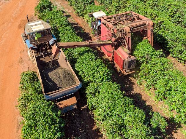 Macchina nel campo per la raccolta del caffè nella piantagione del brasile.